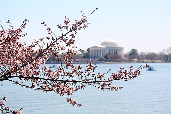Washington DC Cherry Blossom Festival | www.chocolatemoosey.com