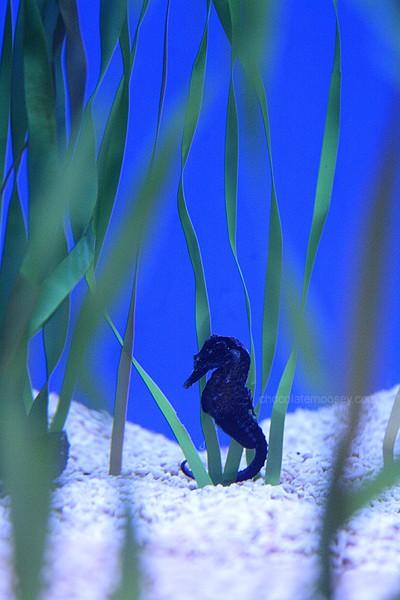 Ripley's Aquarium | www.chocolatemoosey.com