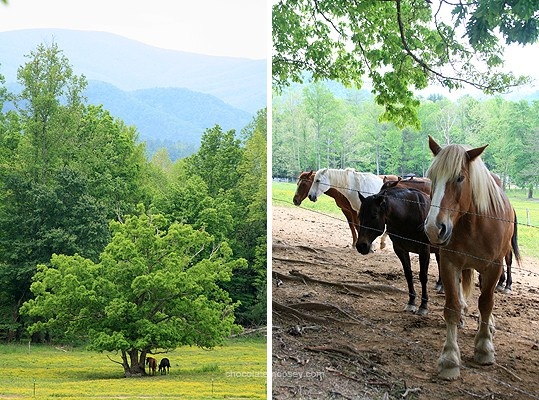 Cades Cove | www.chocolatemoosey.com