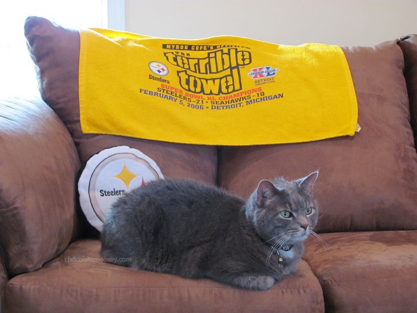 Murray the Steelers Cat